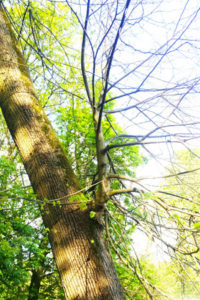 sécheresse des arbres et changement climatique en Méditerranée
