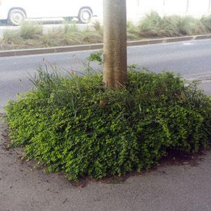plantation d'arbres en ville