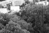 foresterie urbaine