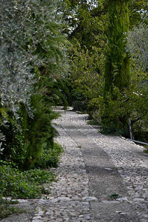 Agroécologie en oliveraie
