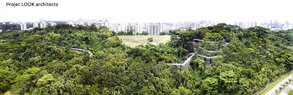 conception de canopee urbaine durable