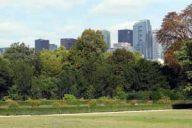 Gestion des arbres en ville