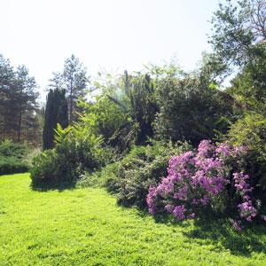 gestion différenciée des arbustes