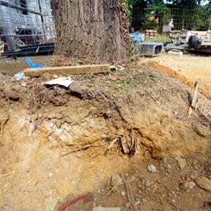 Protection de l'arbre avant travaux