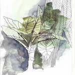 conception de jardin sec