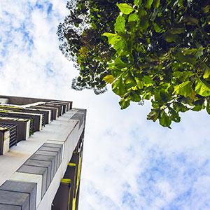 Planter des arbres en ville en région PACA