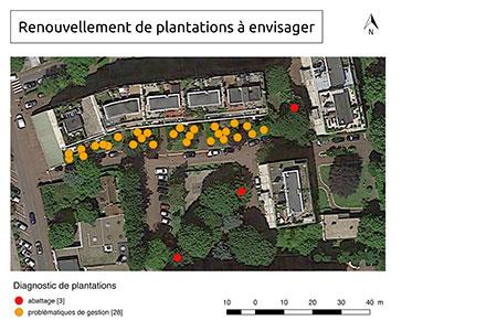 renouvellement de plantation