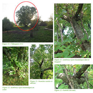 mission arboricole